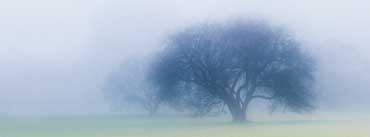 November Fog Cover Photo
