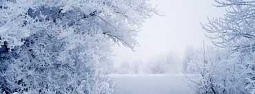 White Winter Scenery Cover Photo
