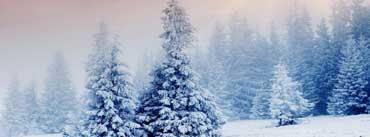 Winter Snow Trees Cover Photo