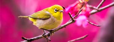 Spring Yellow Bird Cover Photo