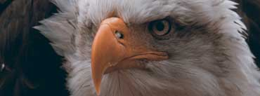 Fierce Eagle Cover Photo
