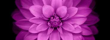 Apple Ios Flower Cover Photo