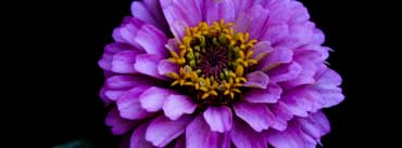 Black And Colorful Flower Cover Photo