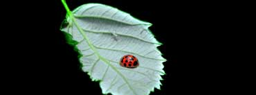 Fomef Ladybird Cover Photo