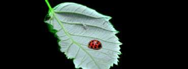 Fomef Ladybird Cover Photo
