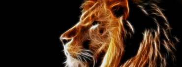 Glowing Lion Cover Photo