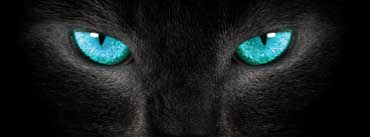 Kitty Eyes Cover Photo