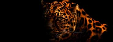 Cheetah Cover Photo