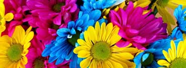 Colorful Daisies Cover Photo