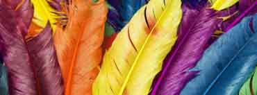 Colorful Feathers Cover Photo
