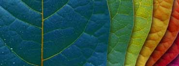 Colorful Leaves Cover Photo