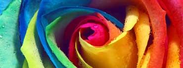 Rainbow Rose Macro Cover Photo