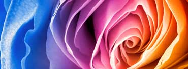 Rainbow Rose Cover Photo