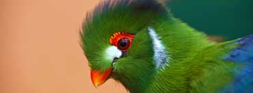 Colorful Bird Cover Photo
