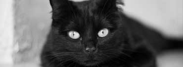 Black And White Cat Cover Photo