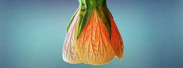 Orange Bell Flower Cover Photo