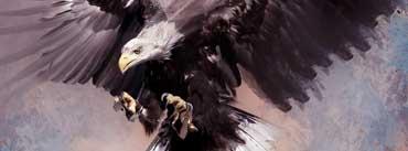 Predator Eagle Cover Photo