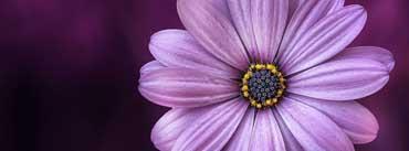 Purple Daisy Flower Cover Photo