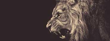 Roar Cover Photo