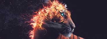 Tiger Artwork Cover Photo