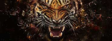 Tiger Backgrounds Cover Photo