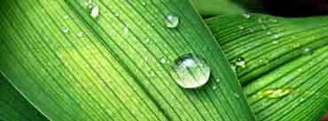 Backyard Raindrops Cover Photo