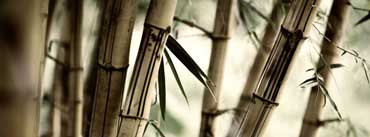 Bamboo Cover Photo