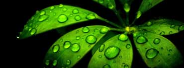 Green Flower Cover Photo