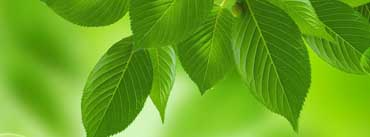 Green Leaves Cover Photo