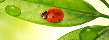 Ladybird Cover Photo