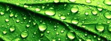 Leaf Raindrops Cover Photo