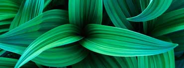 Plants Cover Photo