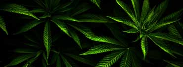 Weed Cover Photo