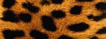 Cheetah Fur Cover Photo