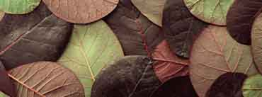Leafy Pattern Cover Photo