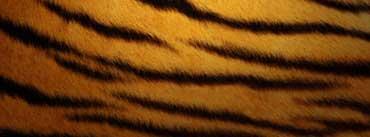 Tiger Skin Cover Photo