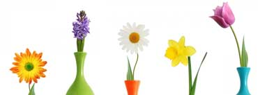 Colorul Flower Vases Cover Photo