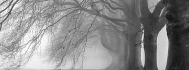 Heavy Branches Cover Photo
