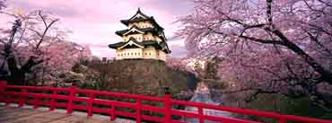 Cherry Blossoms Japan Cover Photo