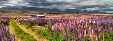 New Zealand Landscape Cover Photo