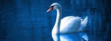 Beautiful Swan Night Lake Cover Photo