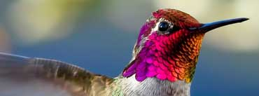 Colorful Bird Head Cover Photo