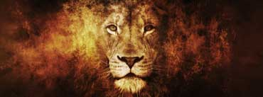 Fire Lion Cover Photo