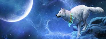 Magic White Wolf Cover Photo