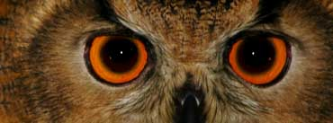 Wise Owl Cover Photo