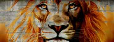 Lion Graffiti Art Cover Photo