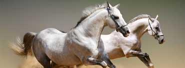 Beautiful Horses Cover Photo