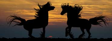 Two Horses Facing Each Other Cover Photo