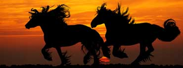 Horses Running Sunset Cover Photo