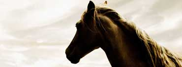 Horse Head Cover Photo